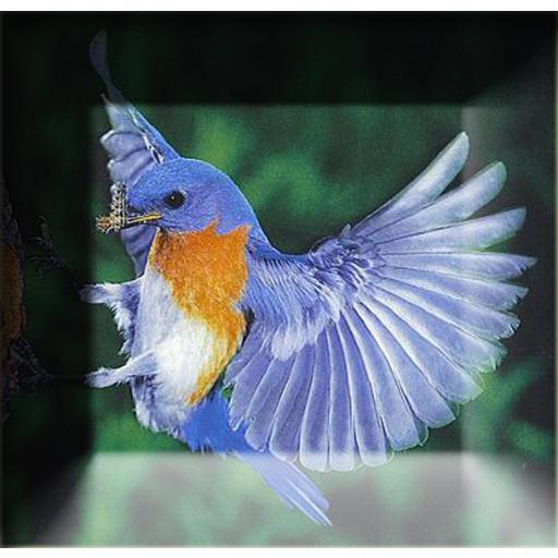 Pikat Burung Terbaik