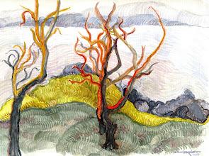 Photo: 2006 The Madrone trees at Pingree Point. San Juan Island, Washington. Watercolor. Collection of Suzy Pingree and Robert Hawkins.