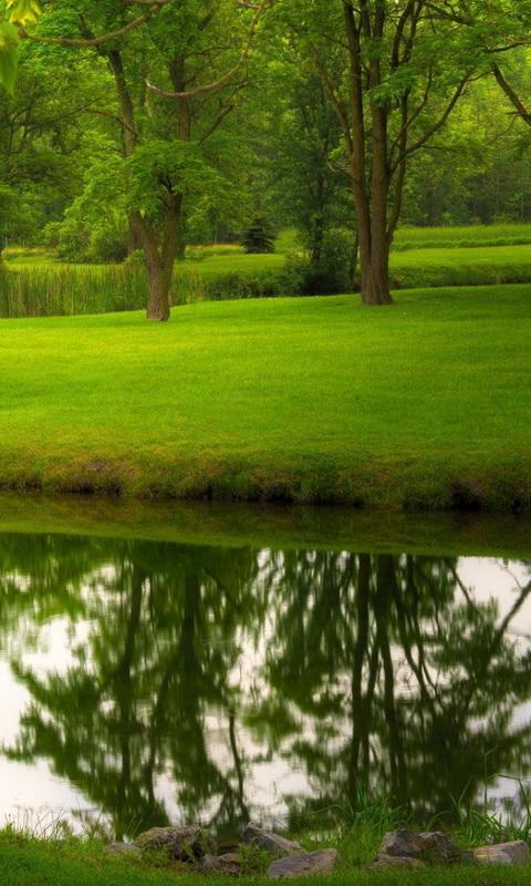 Green Nature Wallpaper Screenshot