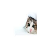 Кошки и коты icon