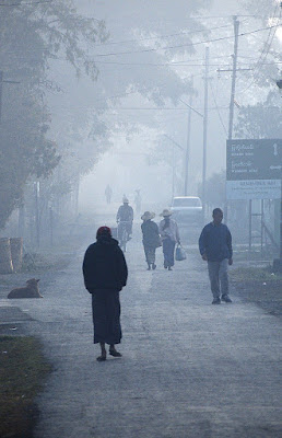 Avvolti nella nebbia... di bury