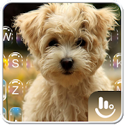 Cute Lucky Puppy Dog Keyboard Theme
