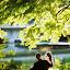 in love by Alin Dobrin - Wedding Other