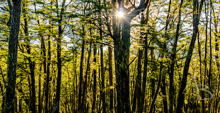 Photo: Forest