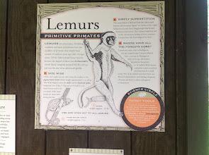 Photo: more info about lemurs