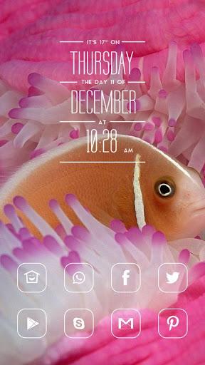 美丽的金鱼主题