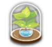 植物の標本