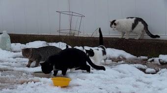Gotham Feral Cats