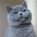Imagenes de gatos icon