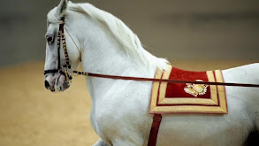 Legendary White Stallions thumbnail
