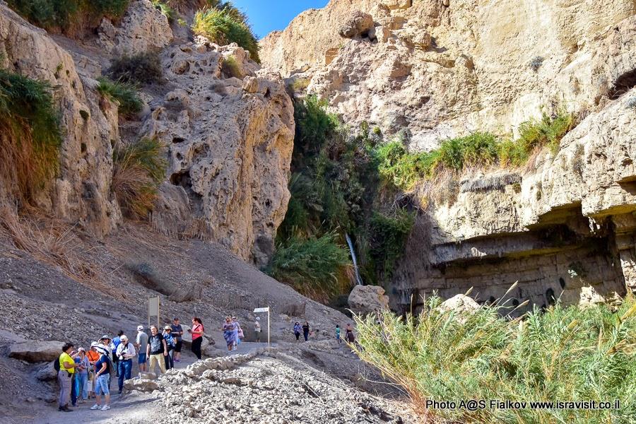 Экскурсия с гидом в Израиле Светланой Фиалковой. Эйн-Геди. В ущелье у водопада Давида.