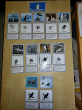 Photo: Lesedose Pinguine -> Endlich Pause