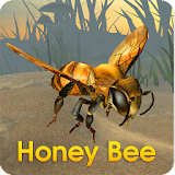 Honey Bee Simulator Apk Download Free for PC, smart TV