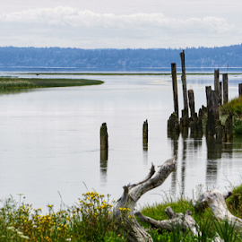Stanwood  by Todd Reynolds - Landscapes Travel