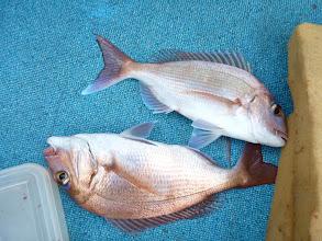 Photo: 真鯛のダブルキャッチでした。