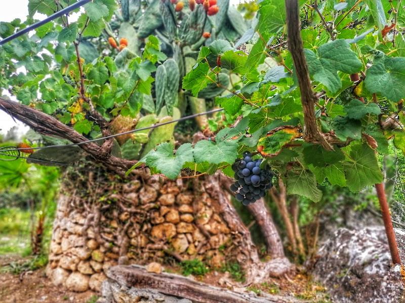 Settembre in Sardegna di ManuPuggi