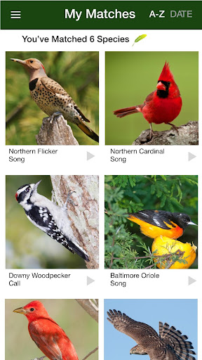 Screenshot for BirdGenie: ID Birds by Song in United States Play Store
