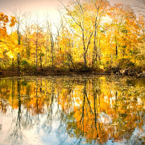 Fall In Princeton by Carol Montgomery - Nature Up Close Trees & Bushes ( color, fall, trees, canal, river,  )