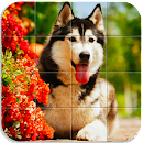 Dog Puzzle file APK Free for PC, smart TV Download