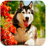 Dog Puzzle Apk Download Free for PC, smart TV