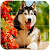 Dog Puzzle file APK for Gaming PC/PS3/PS4 Smart TV