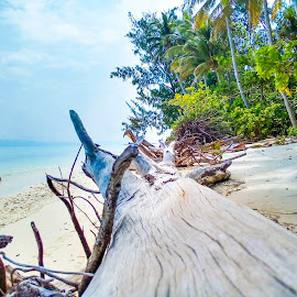 Pio by Fred Nunu - Nature Up Close Sand ( blue sky, coconut, green leaves, beach, tree trunk )