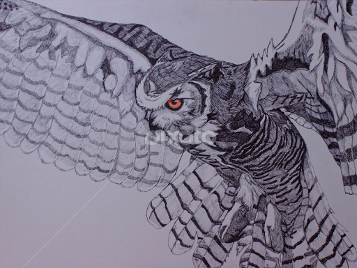 great in flight by valerie aebischer drawing all drawing owl drawing owl
