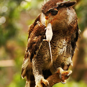 ME & MY SMALL PREY by Ian Sumatika - Animals Birds