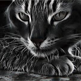 Black cat by Marissa Enslin - Digital Art Animals