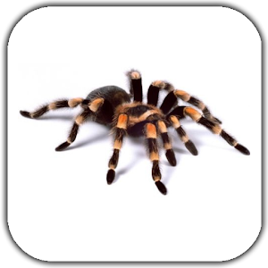Spider Video Live Wallpaper