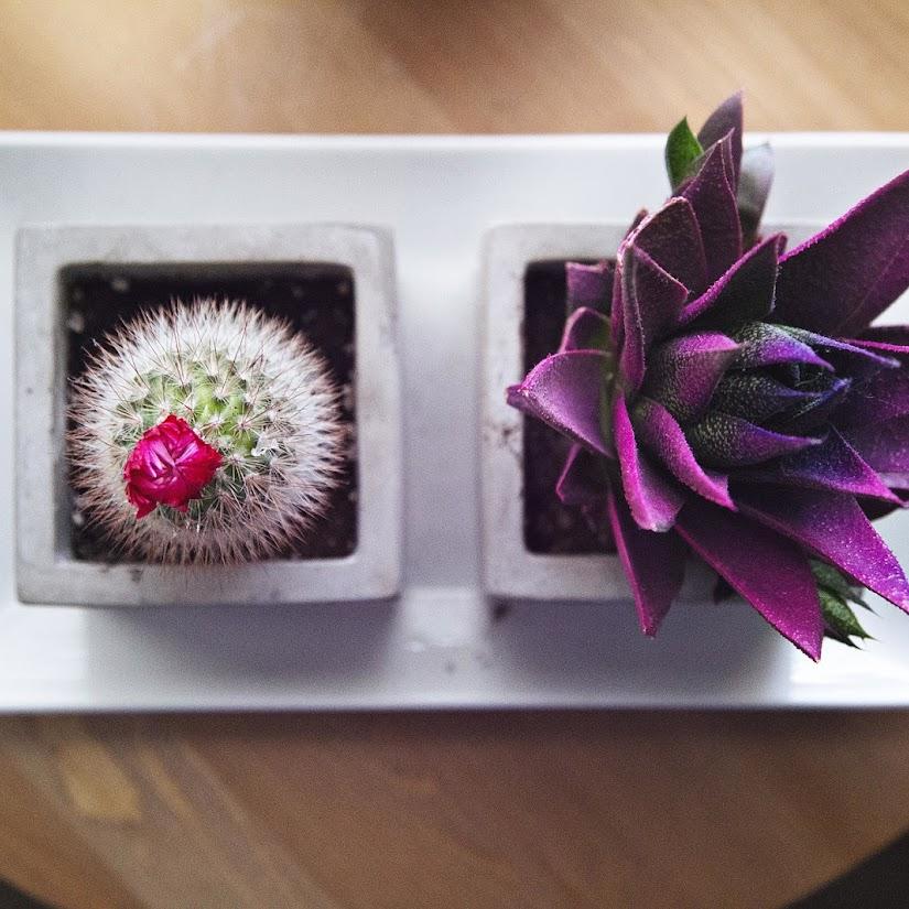 Nuevos estilos en decoración, atrévete con el cactus