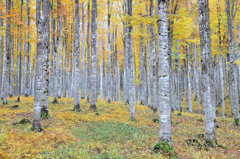 Le foglie in autunno  di renavett