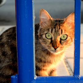 Staring by Florentina  Arvanitaki - Animals - Cats Portraits ( beautiful, cat, animal, staring, pet )