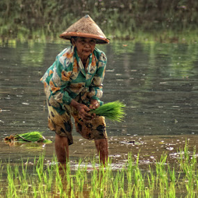 the farmer by Ayah Adit Qunyit - News & Events World Events