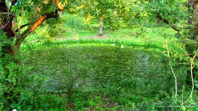Photo: 2012.07.06 - Lacul Baltoaca, in zona la Str. Dr. Valeriu Moldovan