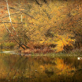 REFLECTING ON FALL by Dana Johnson - Landscapes Forests ( forest, fall, autumn, lake, landscape )