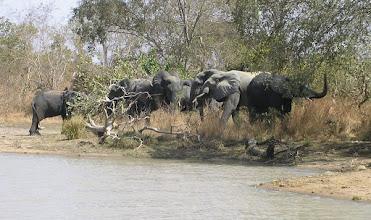 Photo: Burkina Fasso - Park Narodowy Kaboré-Tambi - słonie
