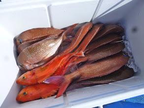 Photo: カワサキさんの釣果です。真鯛11匹でした。