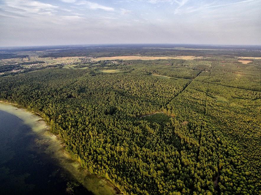 Озеро оточене з усіх сторін лісами