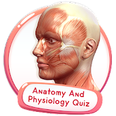 Human Anatomy And Physiology Quiz