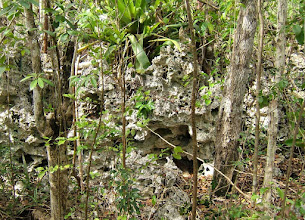 Photo: Bees in the rock - Cayman Formation Dolostone (phytokarst), Ironwood Forest, Mar. 25, 2008