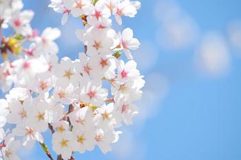 春に気をつけたい進級時クラス替え 園児のSOSサイン例と対処法