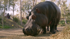 Hungry, Hungry Hippo thumbnail