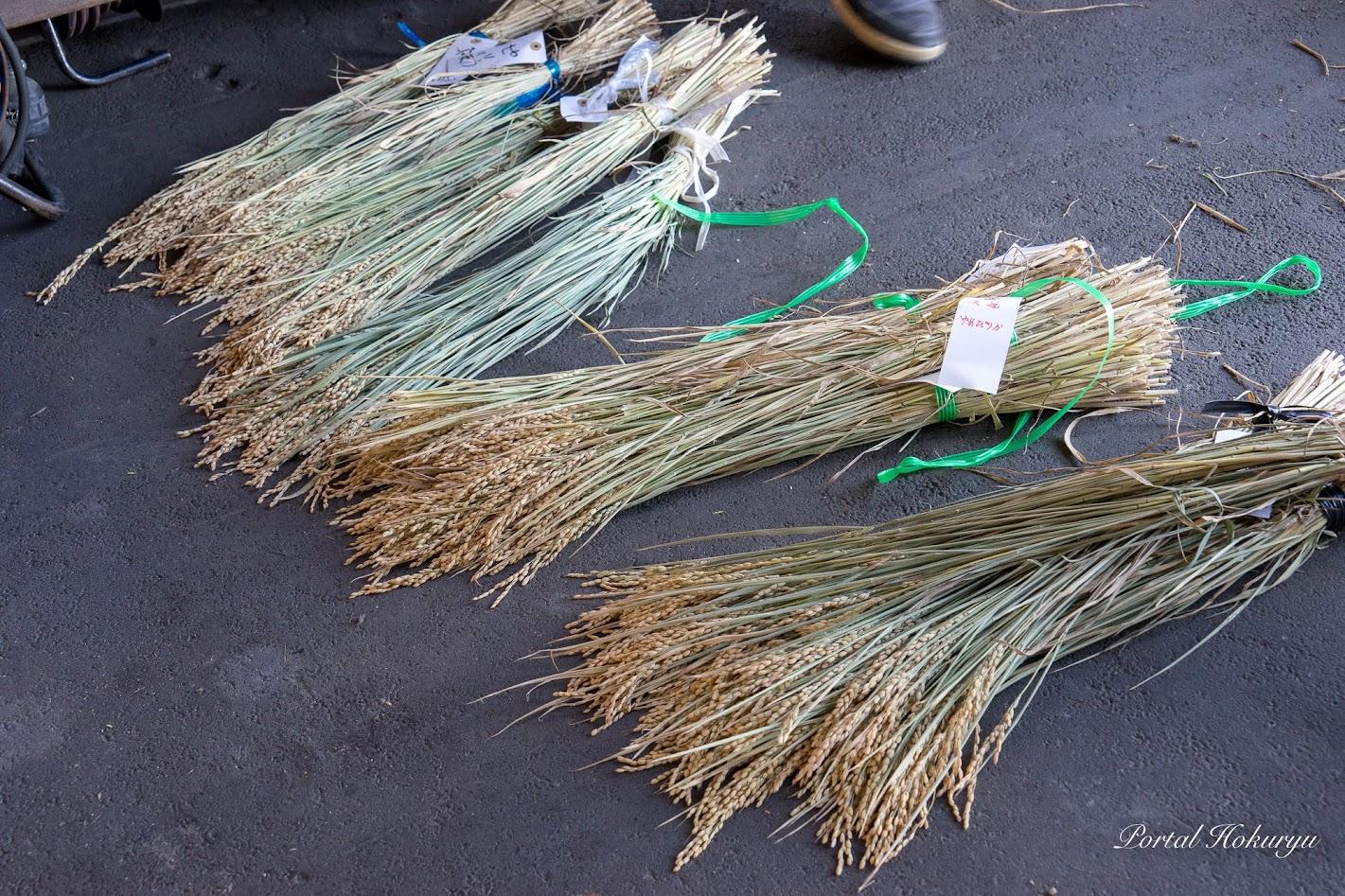 調査用に乾燥された各農家の稲穂