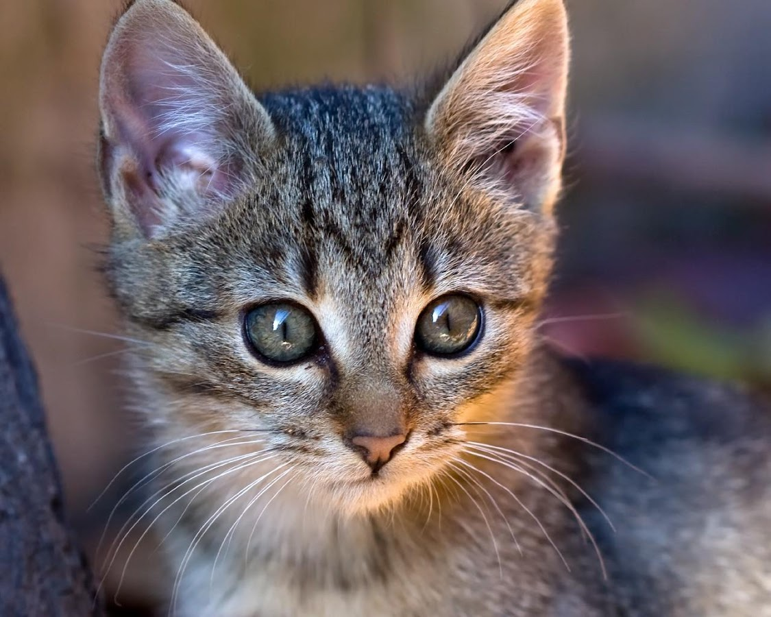 Kucing Dan Kucing Tema Apl Android Di Google Play