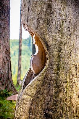 La nascita di uno Stradivari di Jiggly