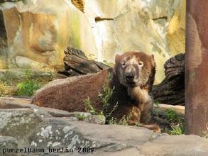 Photo: Knut hat noch ein wenig mehr Farbe aufgelegt ;-)
