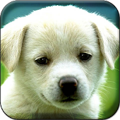 Puppy HD Live Wallpaper