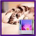 Lovely Cat Wallpaper icon