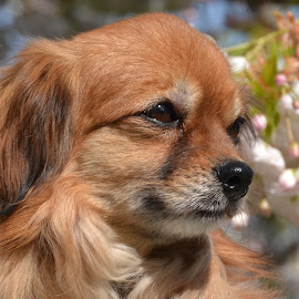 Little dog by Els He - Animals - Dogs Portraits ( springtime, outside, portraits, dogs, portrait, sunny, dog,  )